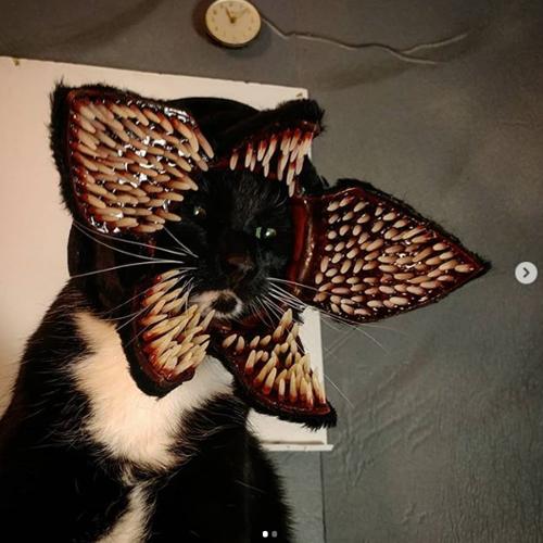 Post from @CAT_COSPLAY of DEMOGORGAN's costume on Instagram.
